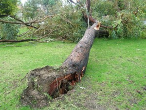 Emergency Tree Damage - Call Specialised Tree Lopping Now
