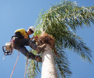 Specialised Tree Lopping
